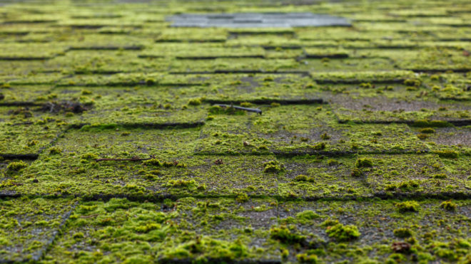 Got Mold? A Handy How-To on Removing Moss From Your Roof